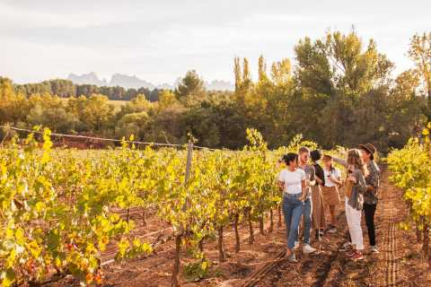 Full-Day Montserrat, Tapas and Wine Tour from Barcelona
