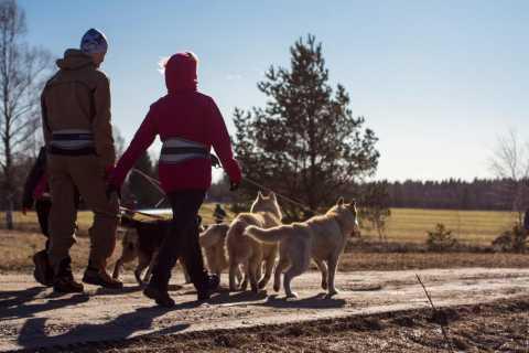 From Tallinn: Husky Park Tour with Cani-Cross Hike