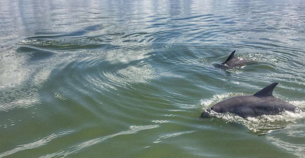 Hilton Head Island: Guided Dolphin Tour