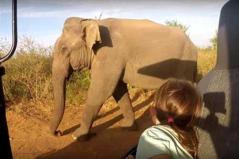 Bentota: 2-Day Elephant, Rainforest, and Village Tour
