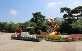 Seoul Zoo, Sky Lift & Elephant-Shaped Tram Combo Ticket