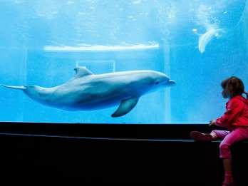 Aquarium Genua: Ticket ohne Anstehen an der Kasse