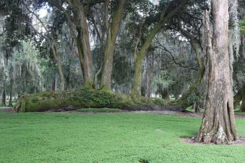 Orlando: balade en hydroglisseur dans les Everglades