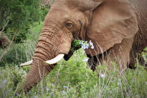 Addo National Park: Guided Half-Day Safari