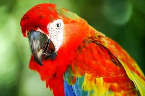 Kuala Lumpur: Vogelpark Tagesticket und One-Way-Transfer