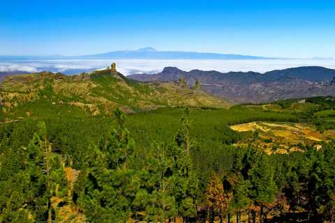 Gran Canaria Highlights Full-Day Tour by Bus