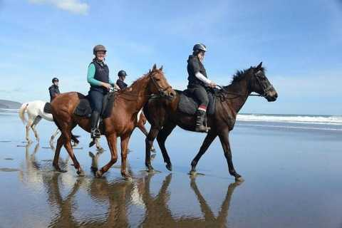 Muriwai: Horse Riding at Black Sand Beach & Gannet Colony