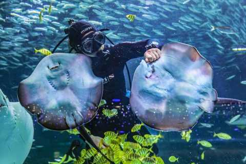 Seoul: The Greatest Urban Aquarium COEX