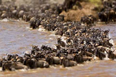 Maasai Mara National Reserve: 1 Night Shared Camping Safari