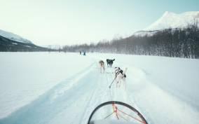 Tromsø: Husky Sledding and Guided Ice Domes Visit