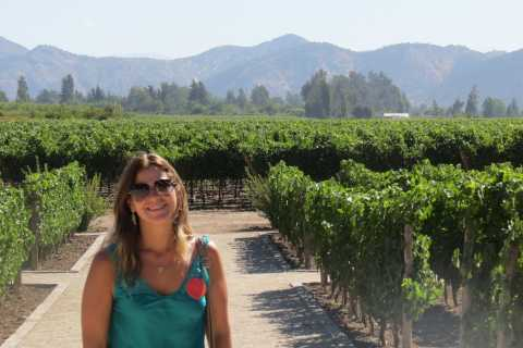 From Santiago: Concha y Toro Winery Tour with Transfer