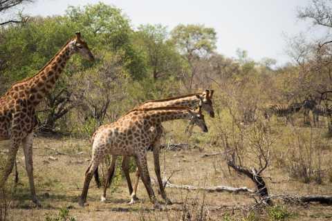Johannesburg: 2-Day Kruger National Park Safari