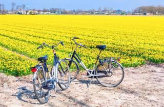 Keukenhof: Kleingruppentour zu den Blumenfeldern per Fahrrad