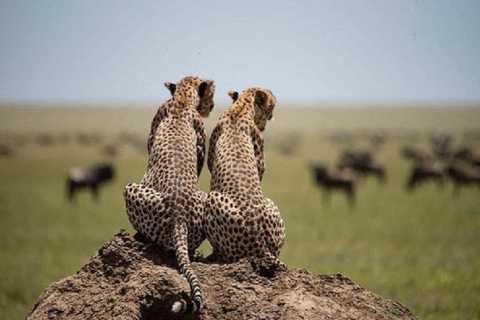 Serengeti and Ngorongoro: 2-Night 3-Day Camping Safari