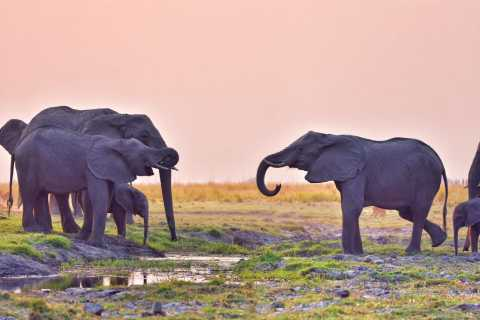 Chobe National Park: Game Drive, Lunch, and Cruise Day Trip