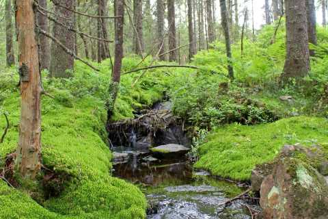 From Oslo: Nordmarka Forest 6.5 Hour Guided Walk