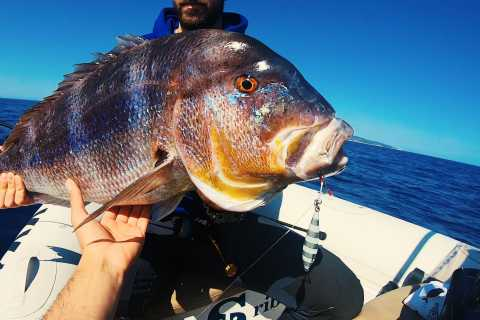 Split: Half-Day Fishing Tour to Drvenik Island