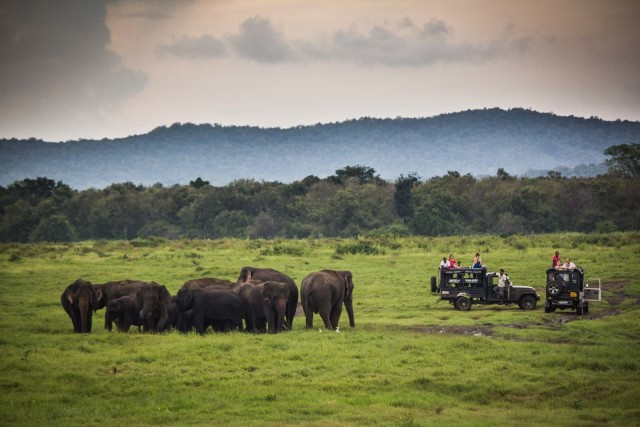Galle / Unawatuna / Mirissa: Udawalawe Safari met lunch