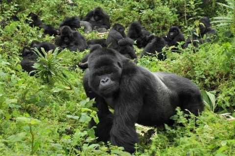 From Kigali: 5-Day Gorilla Trek, Big 5 and Big Cats Tour