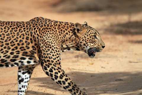 Tangalle: Half-Day Udawalawe Safari