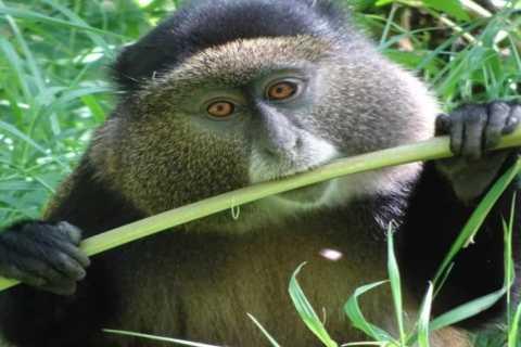 Rwanda: 6-Day Gorilla and Golden Monkey Tracking, Big 5 Tour