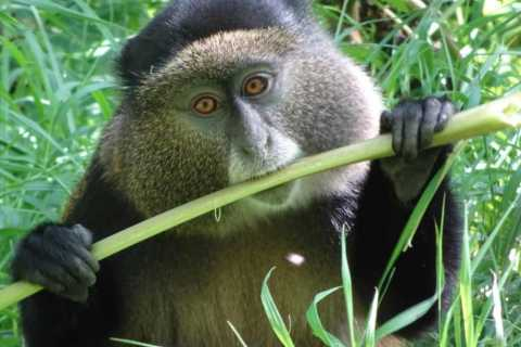 From Kigali: 8-Day Gorillas, Chimps, Big 5 & Big Cats Safari