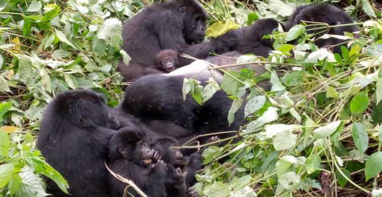 Rwanda: 7-Day Gorillas, Chimps, Big 5, and Big Cats Tour