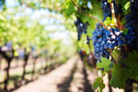 Malibu Wineries Private Group Tour