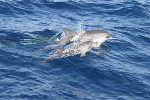 Lanzarote: halfdaagse dolfijnentour naar het eiland Lobos
