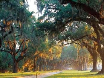 Charleston: Boone Hall & historische Stadtrundfahrt Combo. Foto: GetYourGuide