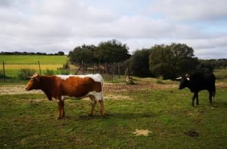 Madrid: Halbtägige Bull Breeding Farm Tour