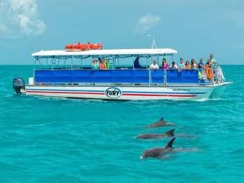 Key West: Delfinbeobachtung und Schnorcheltour