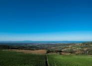 Ab Florenz: Bolgheri Wine Tour mit Verkostung und Mittagessen