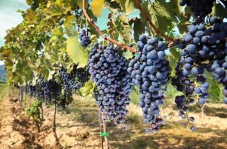 Madrid: Halbtägige Weintour mit Verkostung
