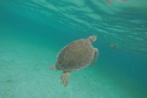 Playa del Carmen & Tulum: Schnorcheln mit Meeresschildkröten