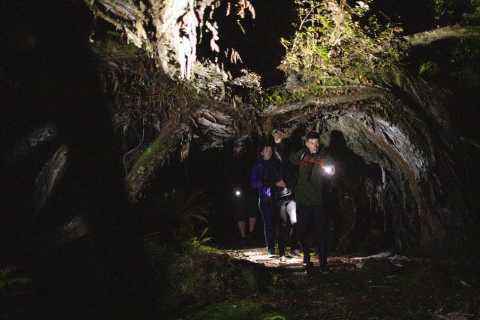 Stewart Island: Wild Kiwi Encounter