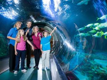 Orlando: SEA LIFE Orlando Aquarium