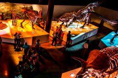 Houston: Passe de 1 ou 3 dias para museus