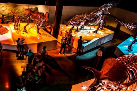 Houston: 1-Day or 3-Day Museum Pass