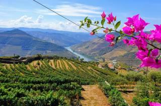 Duero-Tal: Weinverkostung, Mittagessen & Flussrundfahrt