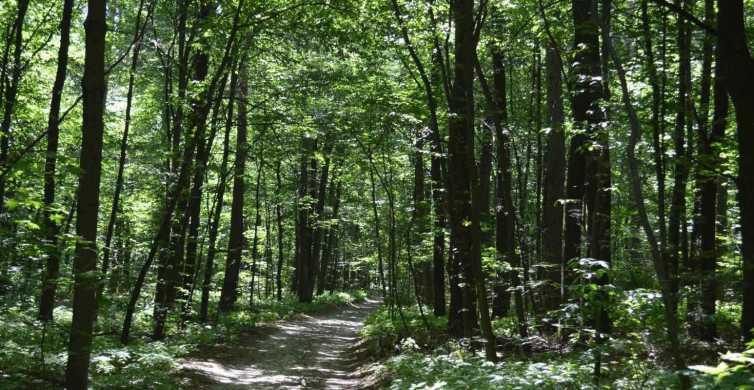 From Lviv: Skole Beskids National Park Private Hiking Tour