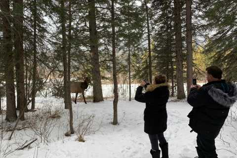 Canmore: Wilderness and Wildlife Viewing Walking Tour