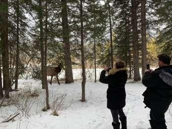 Canmore: Wildnis- und Wildtierbesichtigungstour
