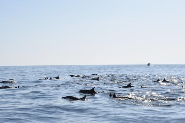 Van Khasab: snorkelen en Jebel Harim Mountain Tour
