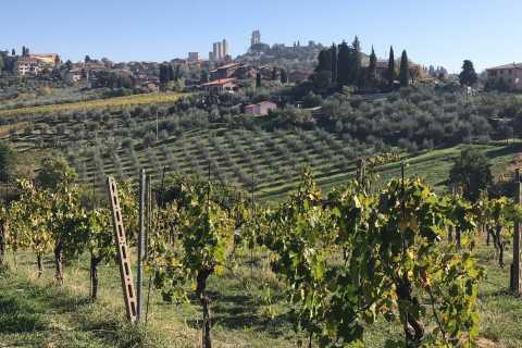Van Livorno: kustexcursie naar Chianti en San Gimignano