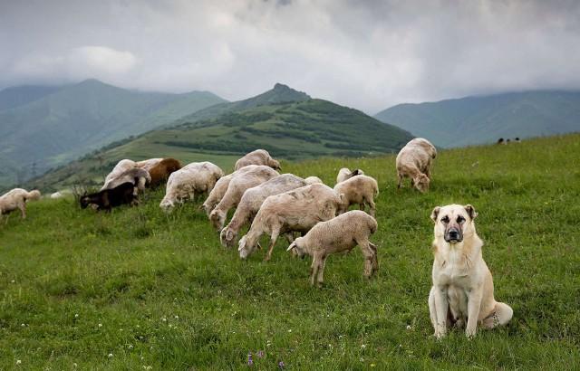 Yerevan: beklimming van de Mount Gutanasar-wandelervaring