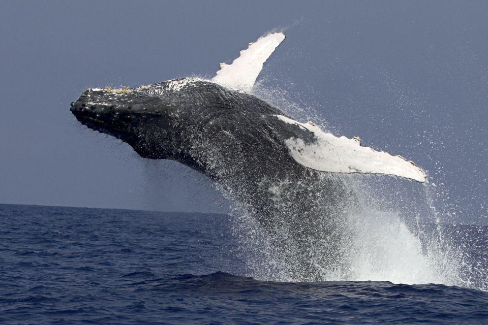 Kailua Kona: Humpback Whale Watching Adventure Cruise