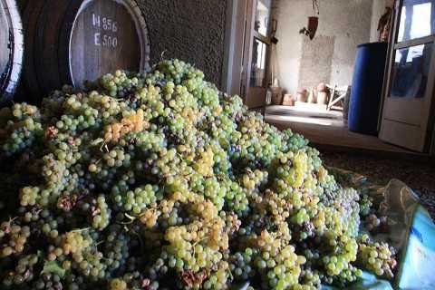 Yerevan: Full-Day Wine Excursion of Areni