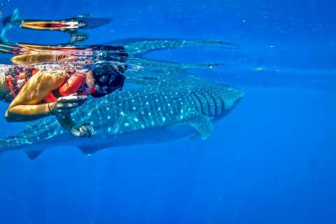 Cancún & Tulum: Private Swim with Whale Sharks Excursion