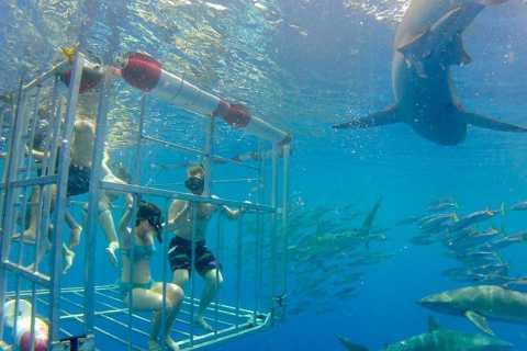 Oahu: plongée avec les requins sur le North Shore